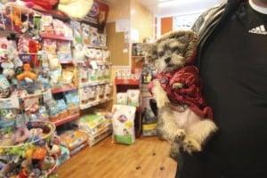 tienda-mascotas