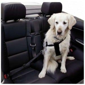 viajar-con-perros-ley