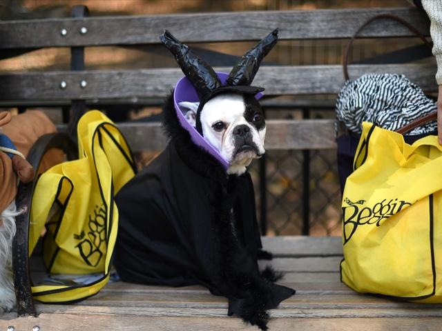 perro-halloween