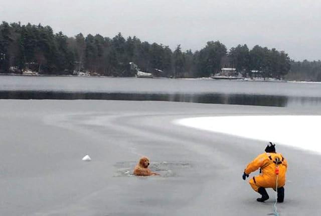 bombero-rescata-golden-retriever-lago-helado